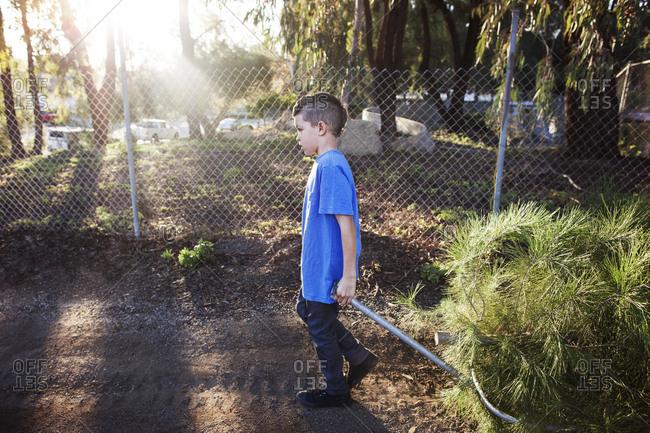Boy pulling cut down pine tree on wagon