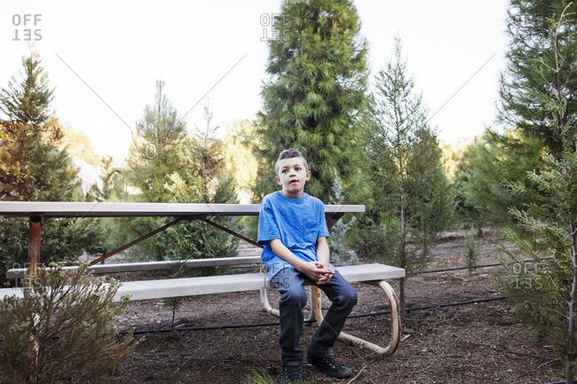Boy in tree farm sitting on bench