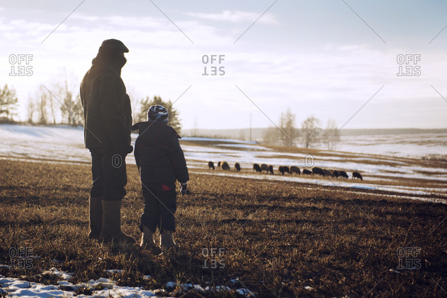 Man and boy watching sheep in snowy pasture
