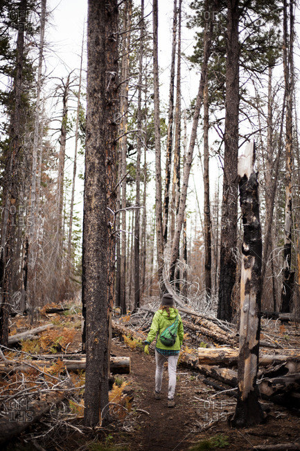 Hiker in a green jacket walking on a trail past fire-damaged trees
