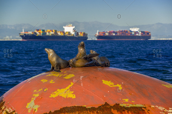 Four seals resting on a bow with container ships in distance