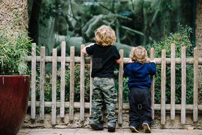 Boys peeking over a fence