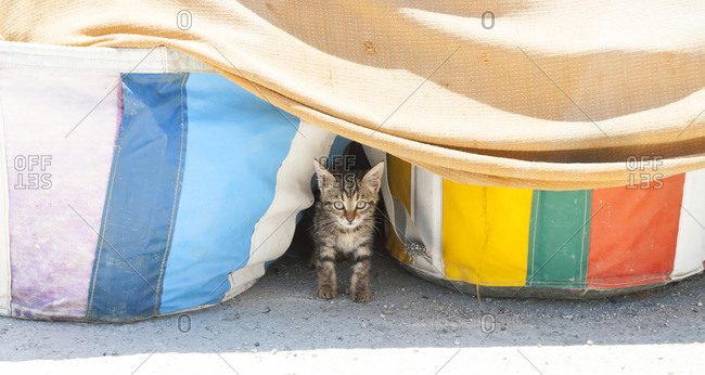 Kitten peeking out from behind two large colorful bags