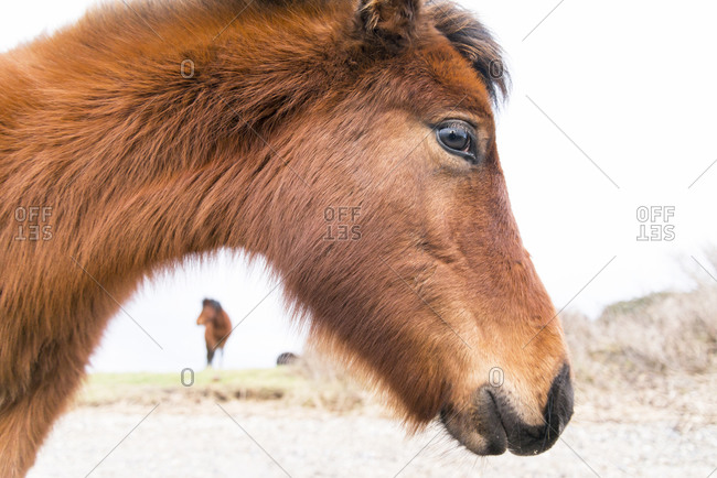 The head of a shaggy, winter-coated foal standing in profile