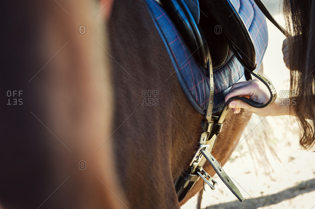 Woman tightening strap of horse's saddle