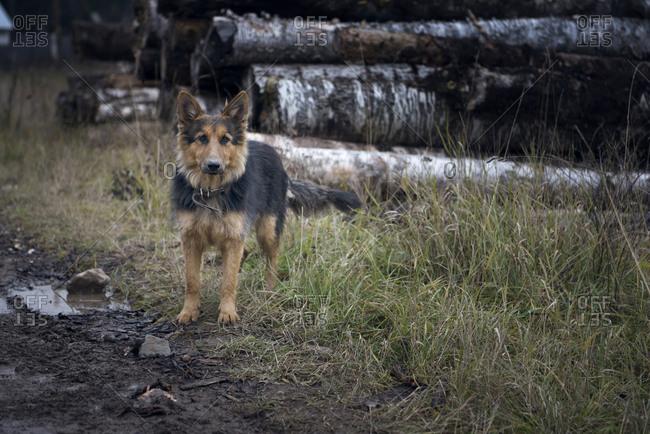 Dog standing in muddy field near log