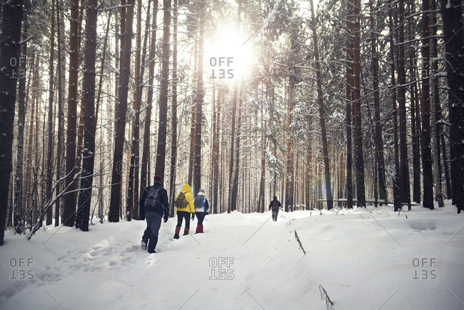 Hikers with backpacks in snowy woods