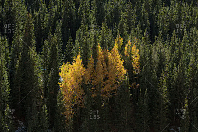 Trees changing color in autumn