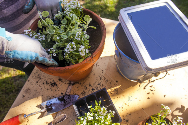 Woman gardening with digital tablet