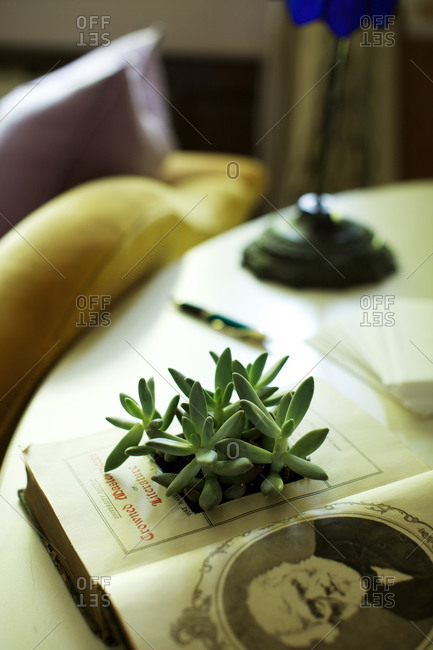 Succulent plant leaves on an antique book
