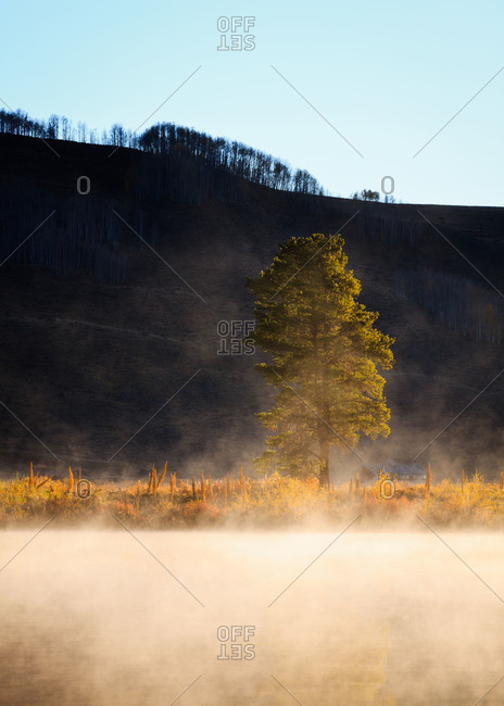A tree rises out of the fog on Peanut Lake, Crested Butte, Colorado
