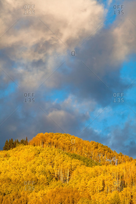 Fall colors on Kebler Pass near Crested Butte, Colorado