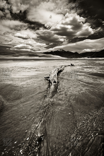 Driftwood in Medano Creek, Colorado
