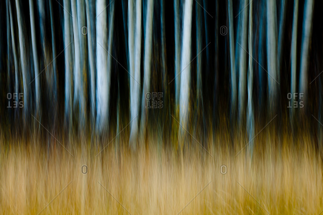 Blurry image of tree trunks and grass