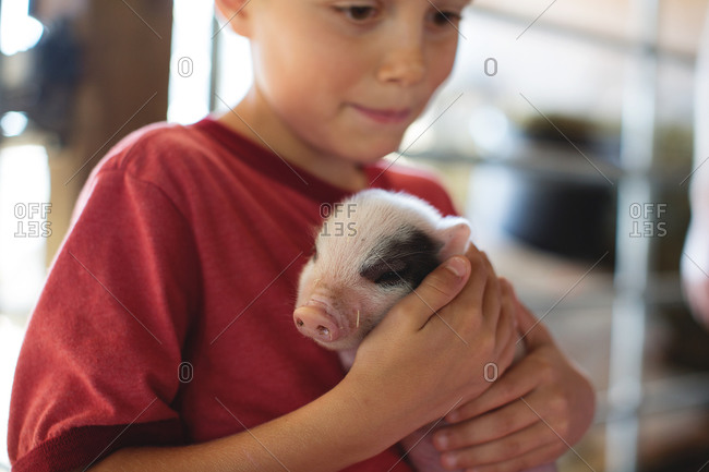 Little boy cradling piglet in petting zoo