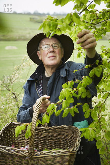 A forager collecting from the hedgerows