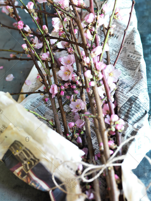 Blooming almond branches in paper
