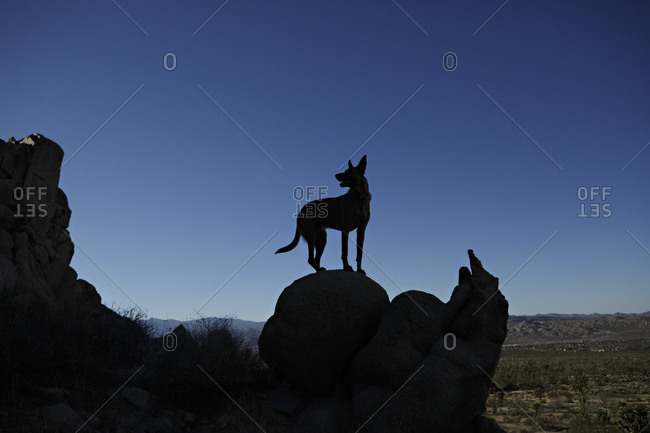 A dog on a rock at dusk