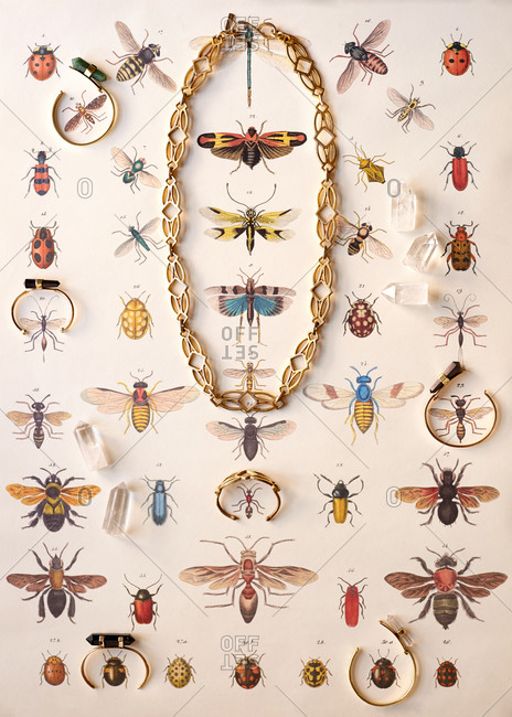 Jewelry on an insect print