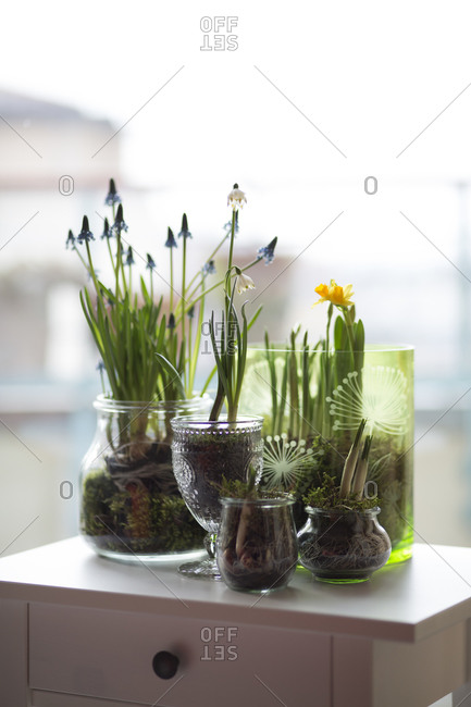 Glasses of different spring flowers