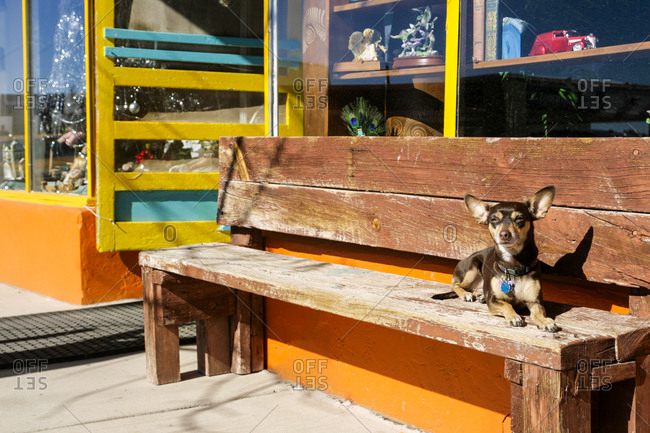 Dog on bench outside New Mexican shop