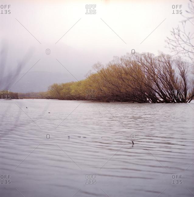 Still water's edge in New Zealand