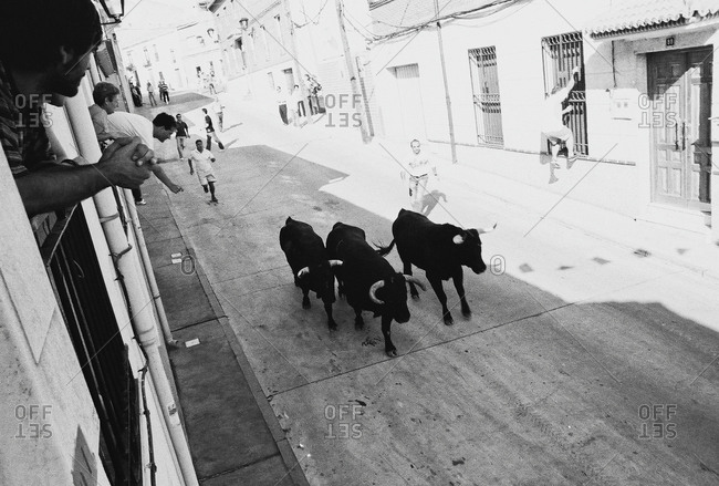 Festival De Sant Miguel, Spain - July 10, 2012: Crowds and bulls in street during Spanish festival