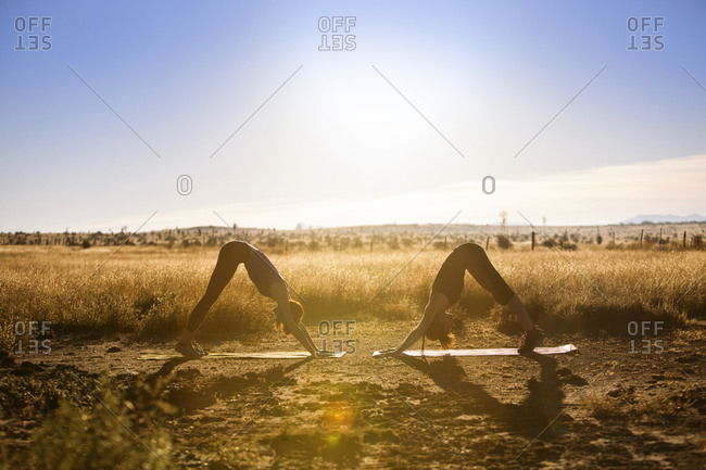 Two women doing downward dog poses in field