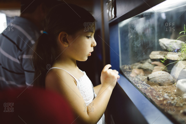 Young girl looking in a reptile habitat tank