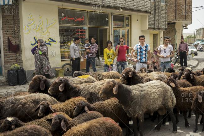 Tabriz, Iran - June 08, 2014: Men wait for sheep to cross the street