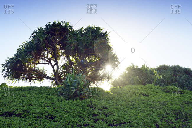 Landscape at Oheo Gulch in evening sun, Maui