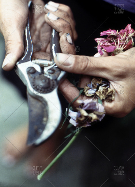 Close up of woman holding pruning shears