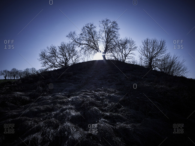 Bare trees on hill