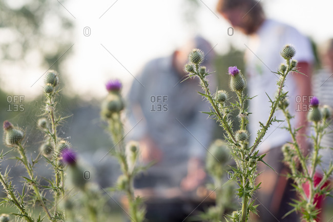 Flowering thistle with people - Offset