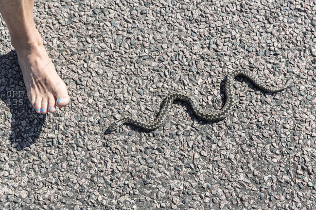 Woman\'s foot and snake
