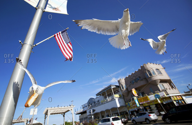 Seagulls swooping in to steal food