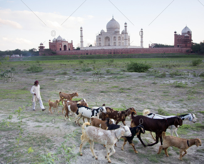 March 2, 2015: Goat herder near the Taj Mahal in Agra, India
