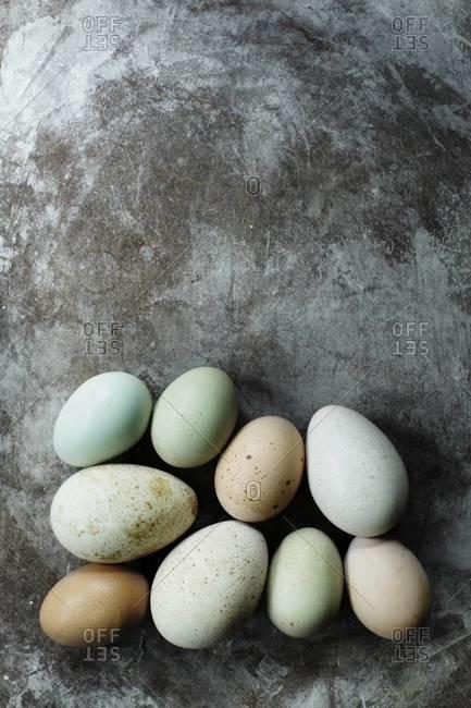 Multicolored turkey and hen eggs