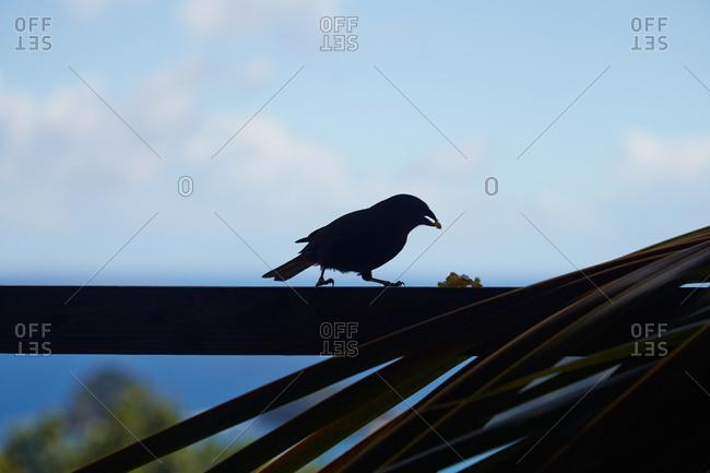 A bird eats snacks from a balcony