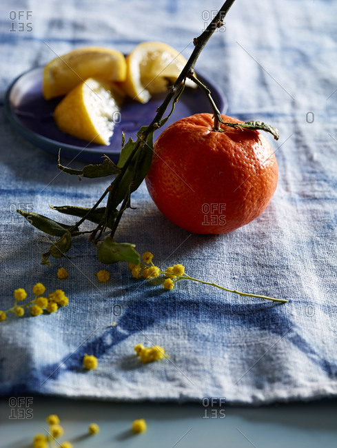 A small twig, tiny flowers and an orange and lemon