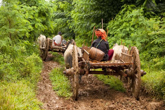 Inle Lake, Shan State, Myanmar - August 20, 2011: Young woman riding ox cart, Inle Lake, Myanmar