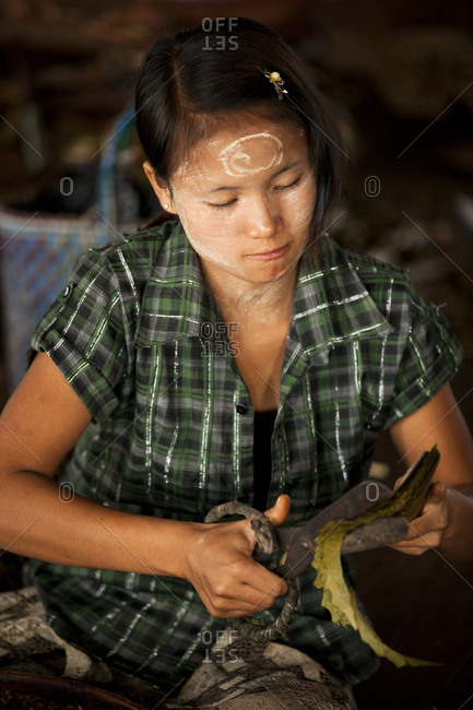 Inle Lake, Shan State, Myanmar - August 20, 2011: Young woman making cigarettes, Inle Lake, Myanmar