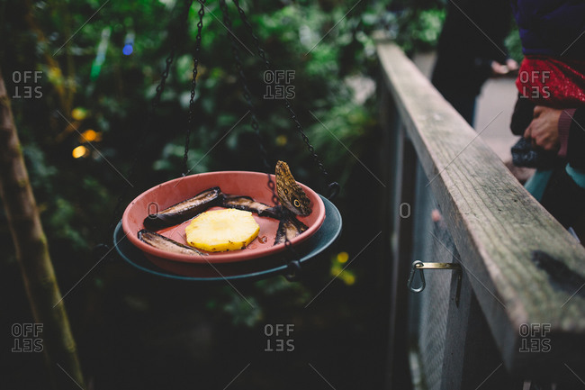Butterfly feeder with fruits - from the Offset Collection