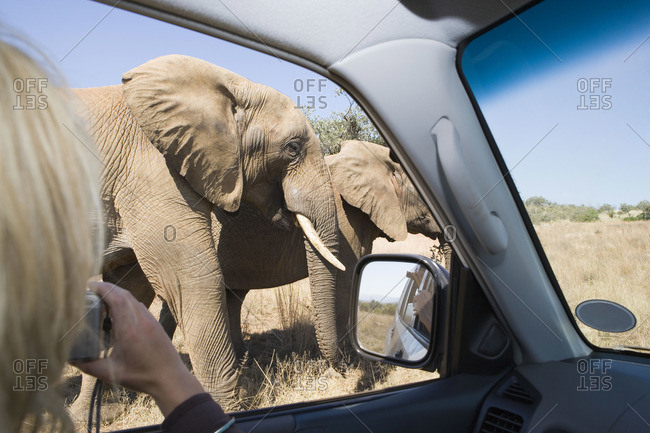 Woman photographing elephants on a safari