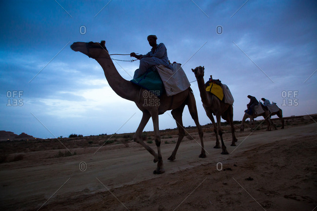 Camel train walking through the desert at dusk