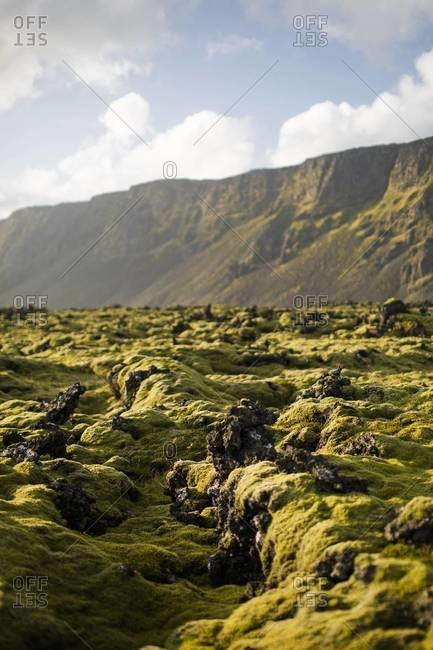 The moss fields in the Reykjanes Peninsula, Iceland
