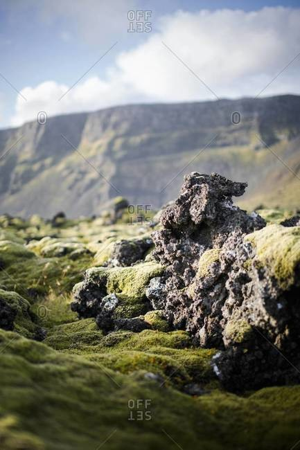 The moss fields on Reykjanes Peninsula, Iceland