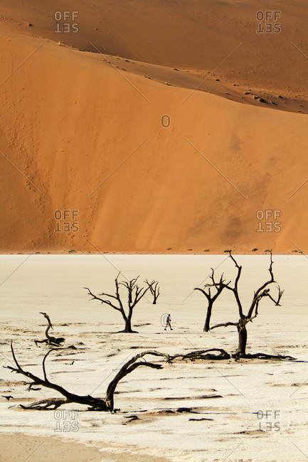 Camel Thorn trees in Deadvlei, a clay pan in Sossusvlei, Namibia