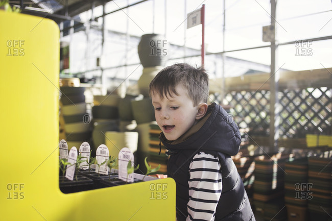 Boy looking at sprouts in nursery