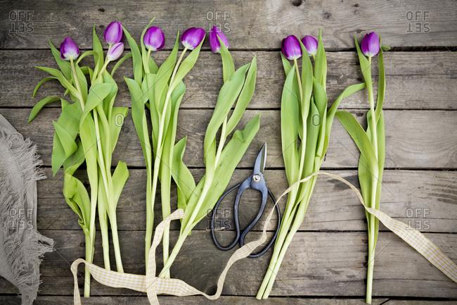 Tulips on dark wood, scissors, ribbon and jute